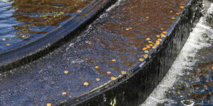 10 Effects of Water Pollution on the Economy